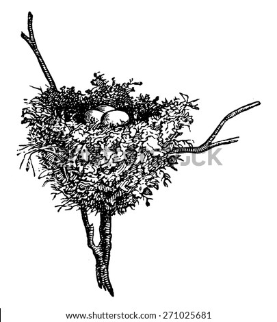 Hummingbird nests, vintage engraved illustration. La Vie dans la nature, 1890. - stock vector