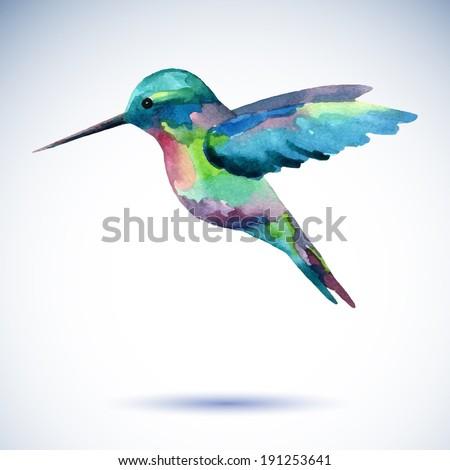 Hummingbird, watercolor painting - stock vector