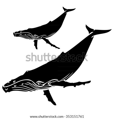 Humpback Whale - Illustration - stock vector