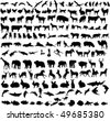 hundreds different animals - vector - stock vector