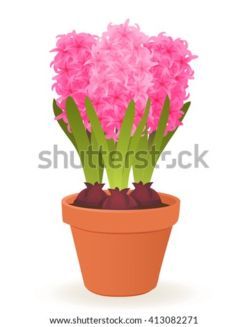 Hyacinth flowers in pot isolated on white background - stock vector