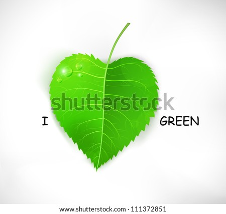 I love green. Fresh realistic vector leaf isolated on white. EPS10 - stock vector