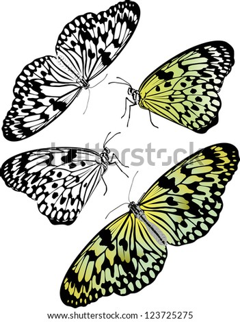 idea leuconoe butterfly insects isolated on white background