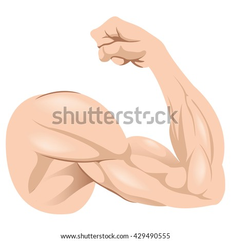 Illustration depicting human anatomy arm - stock vector