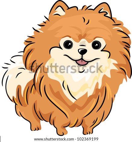 pomeranian vector illustration featuring a pomeranian stock vector 1733
