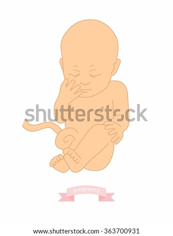 illustration of a baby in the womb  - stock vector