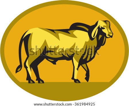 Illustration of a brahman bull looking front viewed from the side set inside oval shape on isolated background done in retro style.  - stock vector