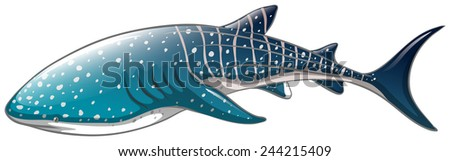 Illustration of a close up whaleshark - stock vector