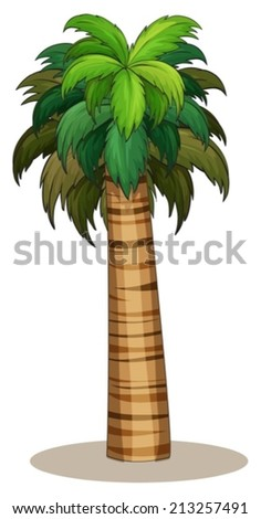 Illustration of a closeup single palm tree - stock vector