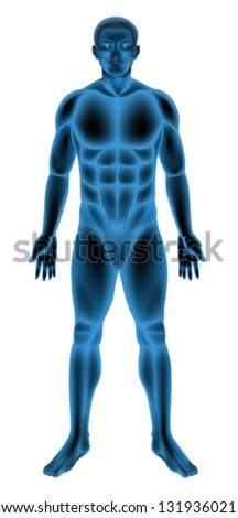 Illustration of a generic male body - stock vector