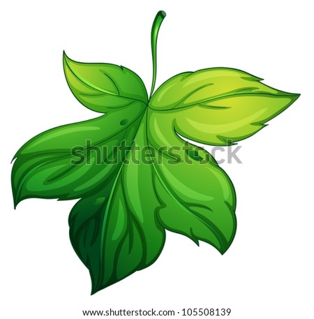 illustration of a green leaf on a white background - stock vector