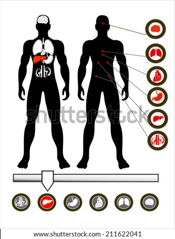 Illustration of a male figure with the internal organs - stock vector