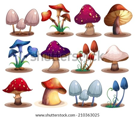 Illustration of a set of different mushrooms - stock vector