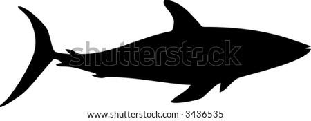 illustration of a shark - stock vector