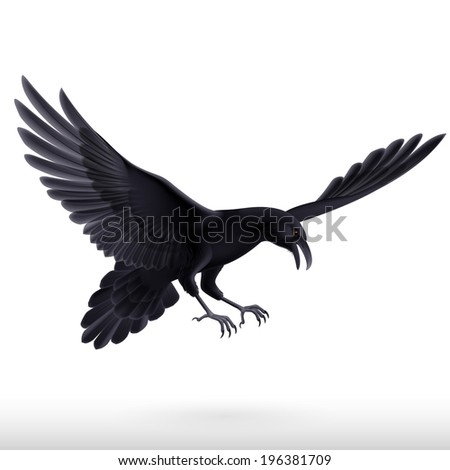 Illustration of aggressive black raven isolated on white background