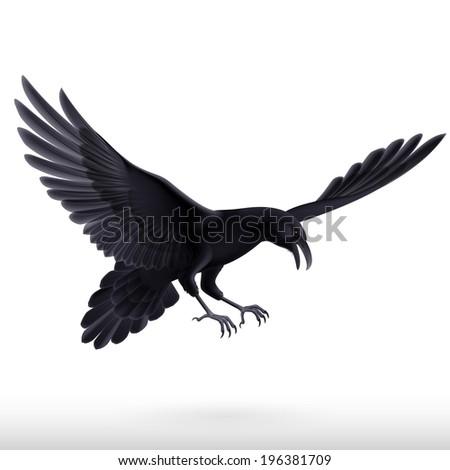 Illustration of aggressive black raven isolated on white background  - stock vector