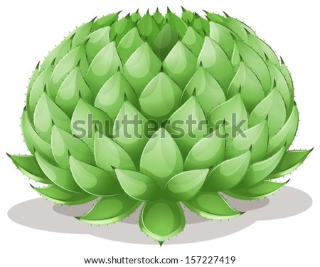 Illustration of an Agave parryi on a white background - stock vector