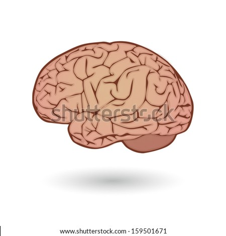 Illustration of an isolated human brain