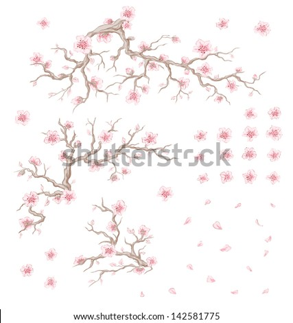 Illustration of bloom cherry branches, flowers and petals - stock vector