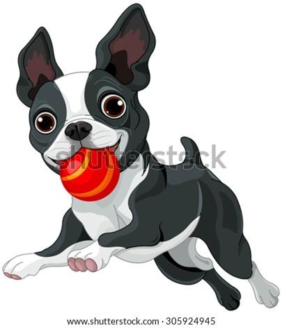 Illustration of Boston terrier running with ball - stock vector