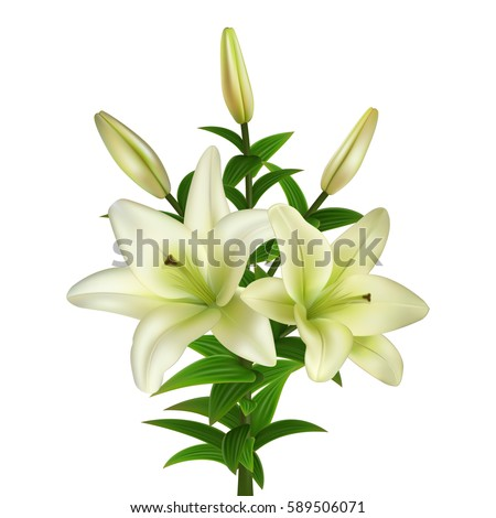 lily stock images, royaltyfree images  vectors  shutterstock, Beautiful flower