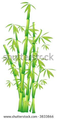 Illustration of chinese bamboo - stock vector