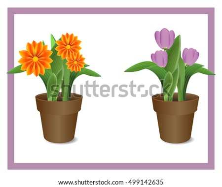illustration of colorful flowers in pots on white background