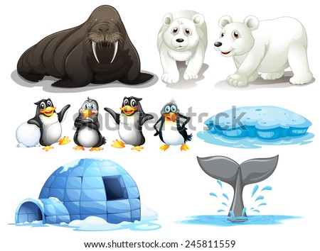 Illustration of different animals from north pole - stock vector