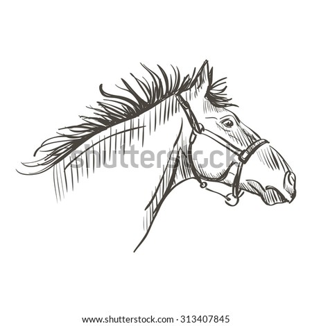 illustration of doodle horse on a white background - stock vector