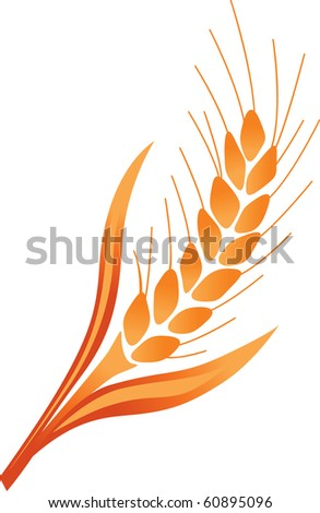 illustration of ear of wheat on a white - stock vector