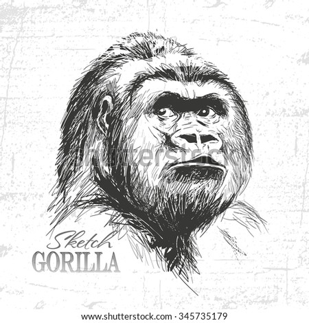 illustration of gorilla face on white background. See also my other animals - stock vector