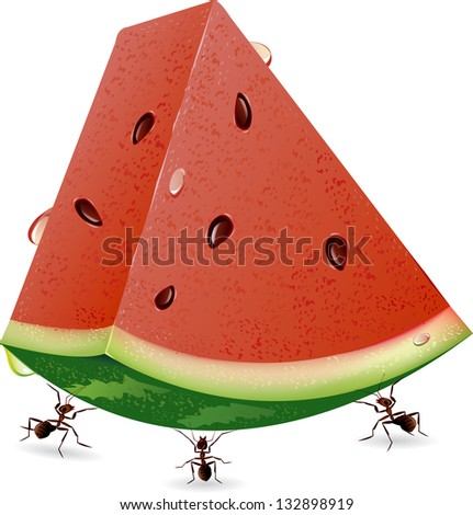 illustration of isolated sliced watermelon and ants on white background - stock vector