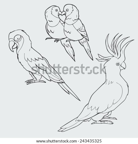 Illustration of macaw, lovebirds and cockatoo parrots - stock vector