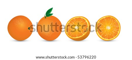 illustration of oranges - stock vector