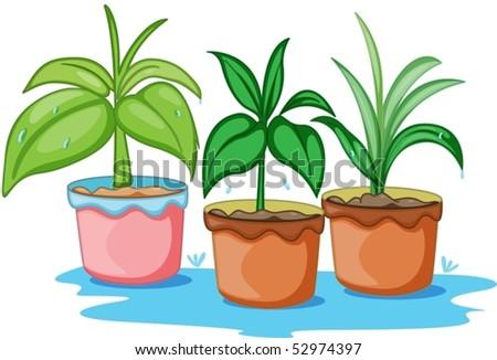 Las mejores plantas de sombra-Loving - plantas para la sombra | HGTV