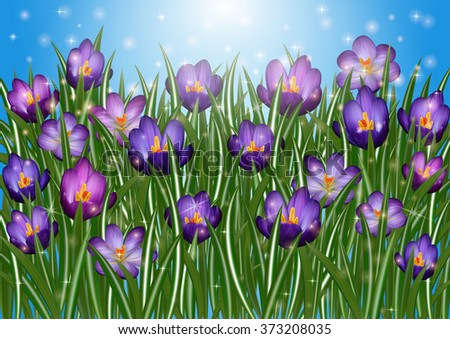 Illustration of purple crocus flowers with sky background