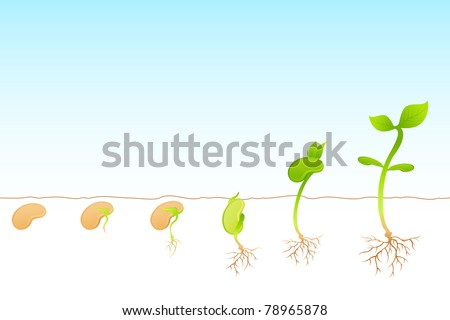 illustration of stages of growth of plant - stock vector
