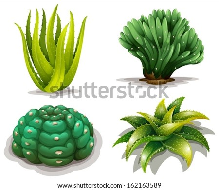 Illustration of the aloe vera plants and cacti on a white background - stock vector