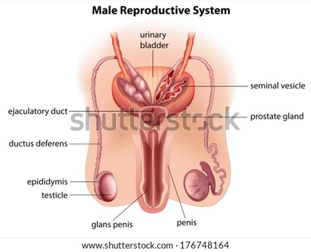 how to clean private parts of female in hindi