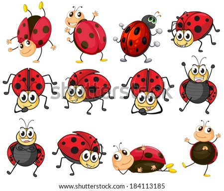 Illustration of the cute ladybugs on a white background - stock vector