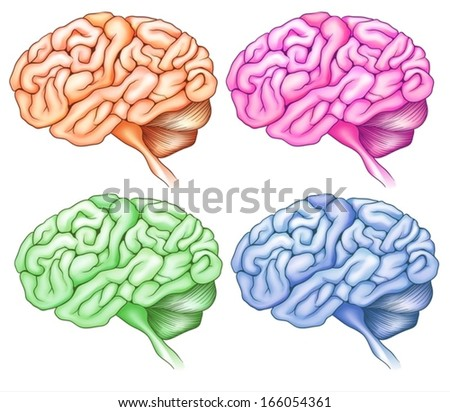 Illustration of the human brains on a white background