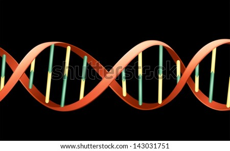 Illustration of the human deoxyribonucleic acid - stock vector