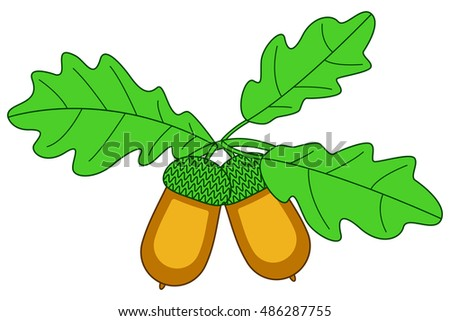 Illustration of the oak branch with acorn fruits