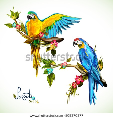 Illustration Two Parrots On Tropical Branches Stock Vector