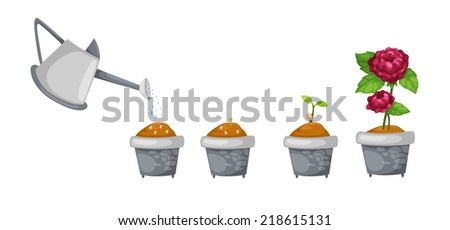 illustration of watering can with rose life cycle vector - stock vector
