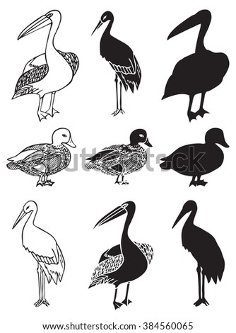 illustration on white background bird pelicans, duck and stork decorative pattern silhouette