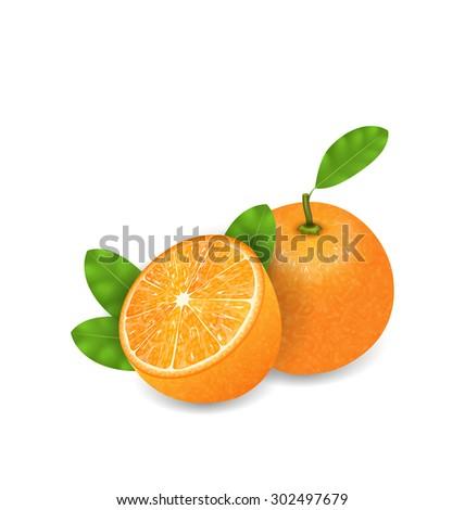 Illustration Photo Realistic Set Orange Fruits, Cut and Slices, Ripe Citrus - Vector - stock vector