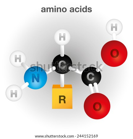 Illustration representing a composition and structure of the amino acid chemical element, ideal for educational books and institutional material - stock vector