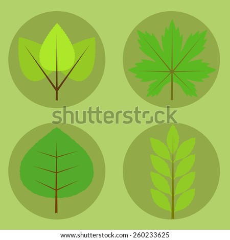 Illustration set of maple, oak, birch and beech tree leaves with spring colors.Spring leaves composed on green background - stock vector