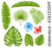 Illustration Set of Tropical Leaves, Collection Plants Isolated on White Background - Vector - stock photo